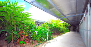 Tropical landscaping between kennels
